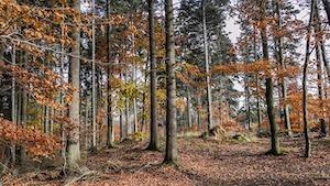 Dubový les, vision quest